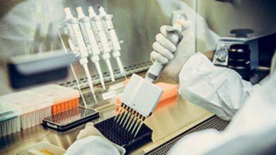 أمل يلوح علاجا للوباء.. خلايا تائية في الدم