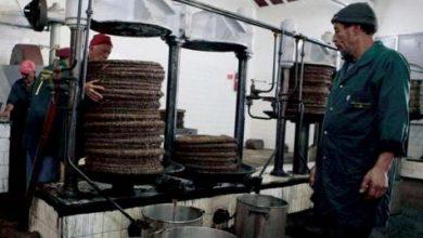 تراجع إنتاج زيت الزيتون التونسي 65 %