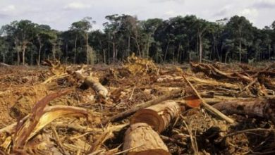مجموعات أوروبية تجارية تهدد بمقاطعة البرازيل بسبب إزالة الغابات